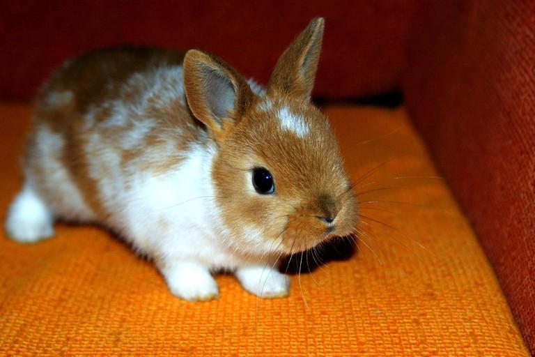 bunny-1567479_1920