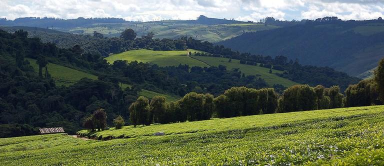 Tea plantation in Tanzania