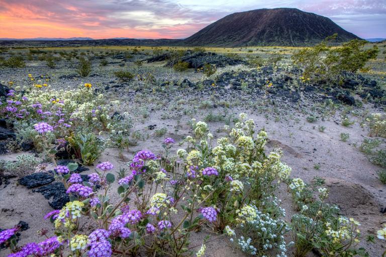 Mojave Trails National Monument | Bureau of Land Management Flickr