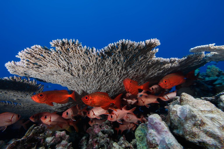 Papahanaumokuakea | NOAA Photo, credit Greg McFall