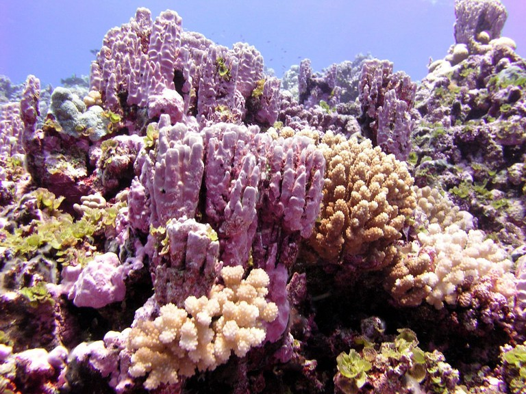 Rose Atoll Marine National Monument | NOAA Photo Library Flickr