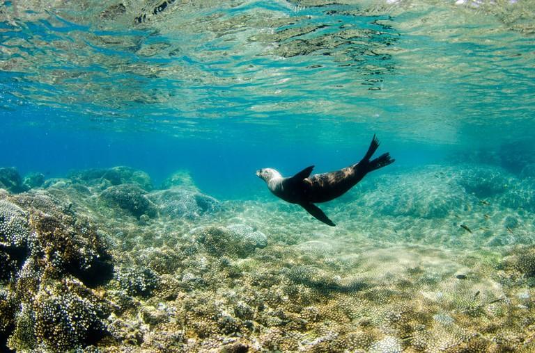 Sea Lion in Espiritu Santo Islands, Mexico | ©Leonardo Gonzalez/Shutterstock