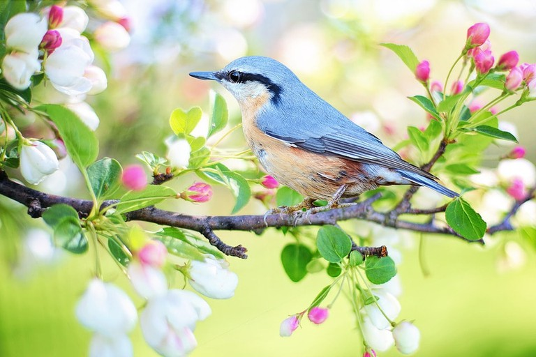 spring-bird-2295431_960_720