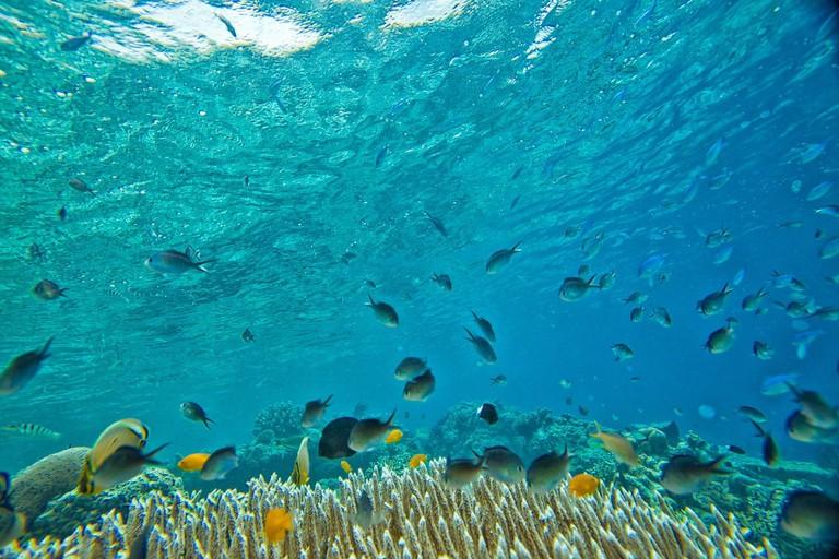 Widi Islands Marine Biodiversity | © Kanenori:Pixabay