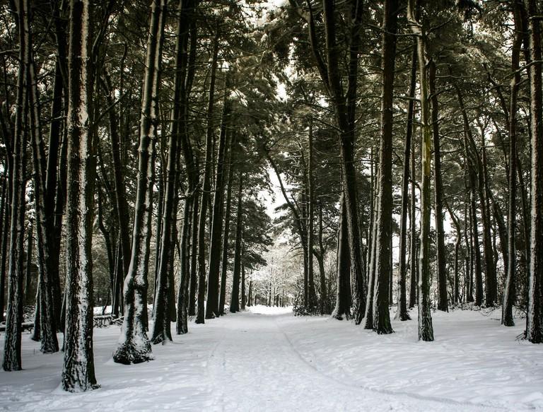 Winter in the Lickey Hills | © Adam Hinett Flickr