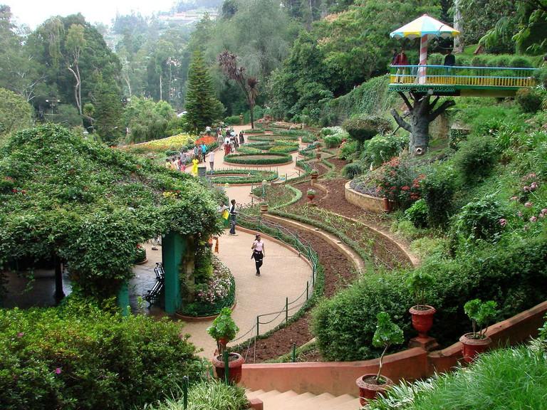 1280px-Botanical_Gardens_-_Ootacamund_(Ooty)_-_India_03