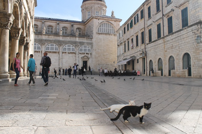 Cats, Dubrovnik | © Connie/Flickr