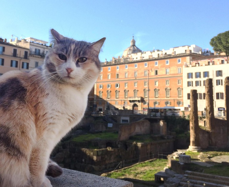 One of the cats of Largo Argentina | © Emma Law