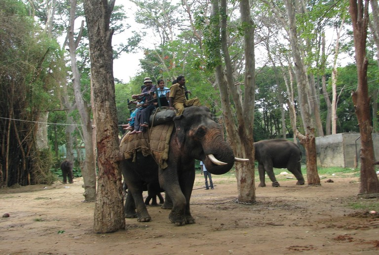 3.elephant_ride_