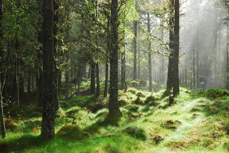 The Great Glen Way, Dunnain Hill | © Karsten Berlin / Flickr