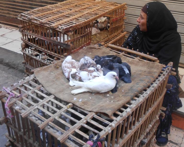 Radwa managing the leftover pigeons| © Mariam Ghorab