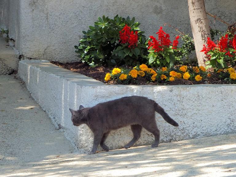 Doće maca na vratanca | © Keith Roper/Flickr