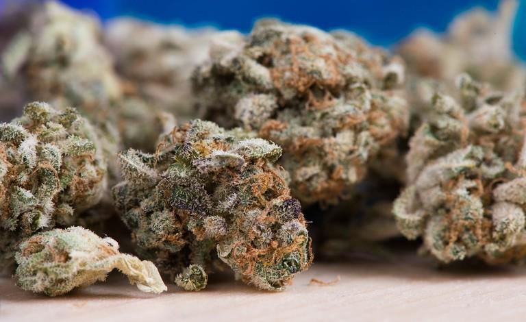 cannabis-2150543_1280