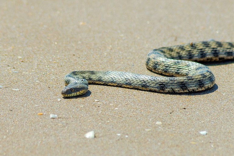 Don't be surprised to see snakes instead of seals by the beach | © Javid Bunyadzade/WikiCommons
