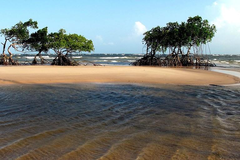 Ilha_de_Marajó_Beach,_Pará,_Brazil