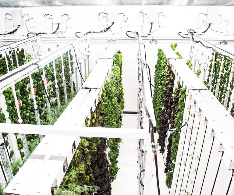 Indoor-Farming-with-ZipGrow-1200x1000