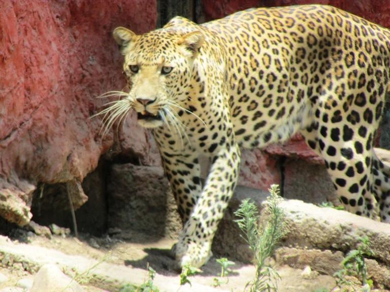Indore zoo.v1