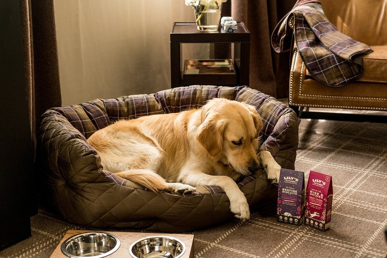 pearl_canine-package_james-bedford-1-1