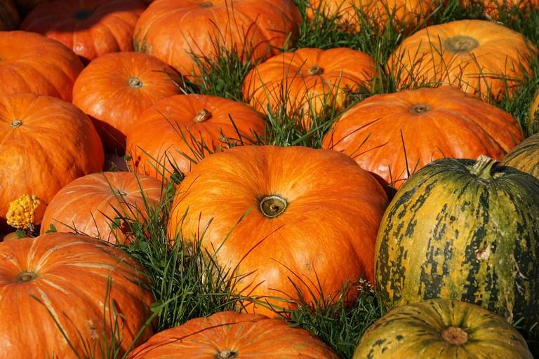 Pumpkin | ©suju/Pixabay