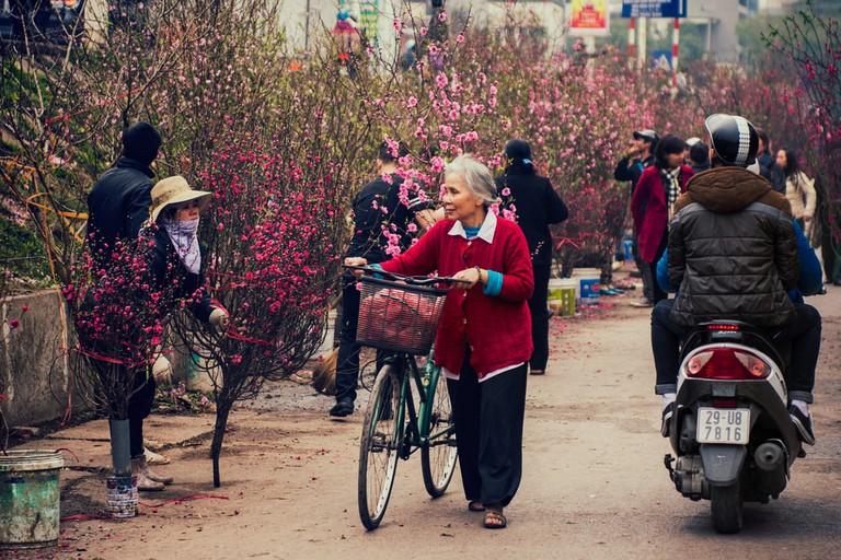 Pink peach flowers in Hanoi   © Quang Vu/Shutterstock