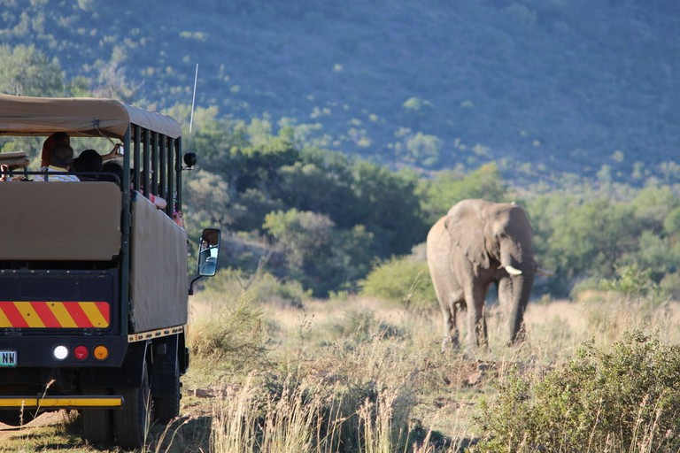 Elephant encounter on a game drive in Pilanesberg Game Reserve | © Irmelamela/Shutterstock