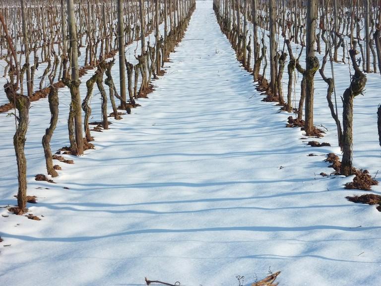 vineyard-636229_1280