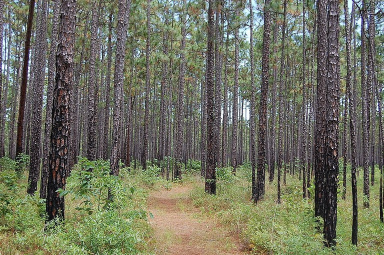 1024px-Francis_Marion_NF1