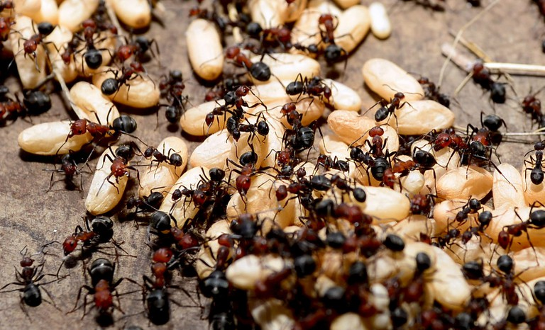 Spray 'n' Prey, ridding Ellsworth of insect-nificant critters