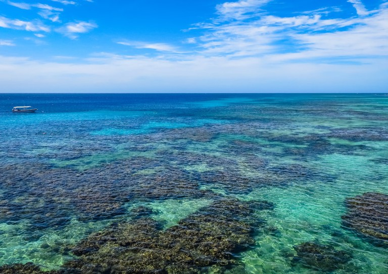 Crystal Clear Seas