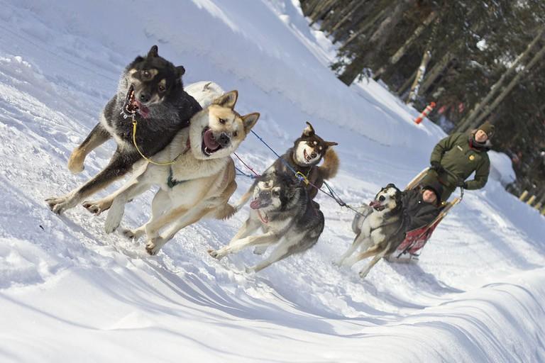 Dog_Sled_Rides_(6836608704)