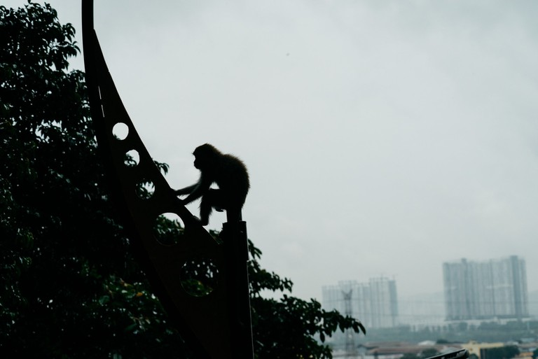 These primates are often seen just outside the busy city | Irene Navarro / © Culture Trip
