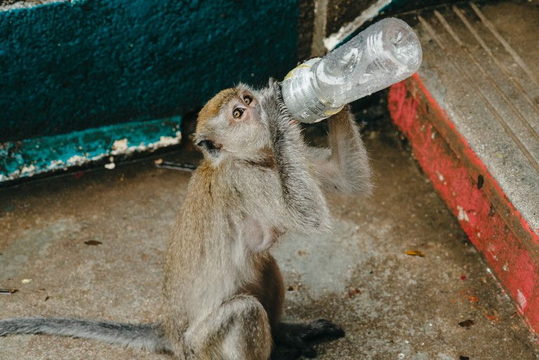 The monkeys here are always in search for food | Irene Navarro / © Culture Trip
