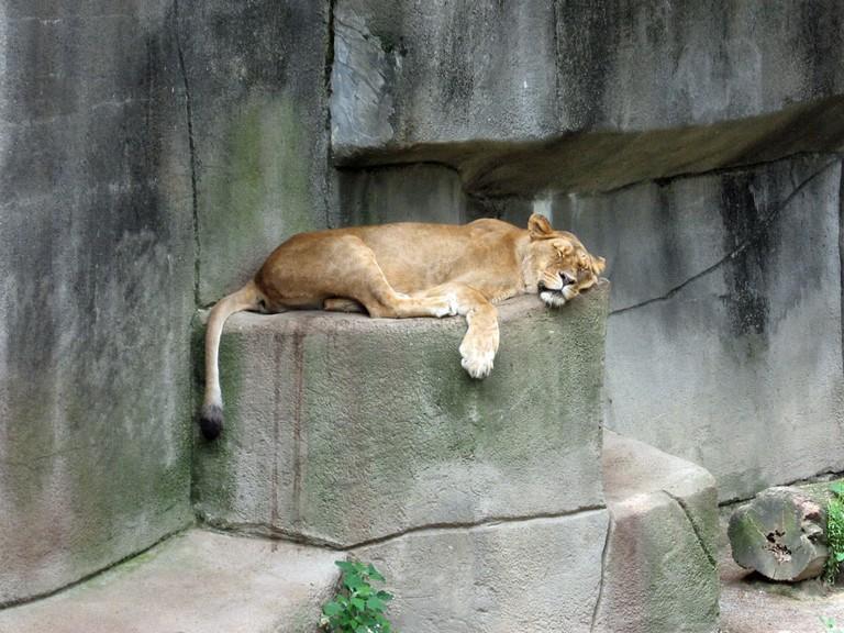 Erie Zoo | © Alex Harden / Flickr