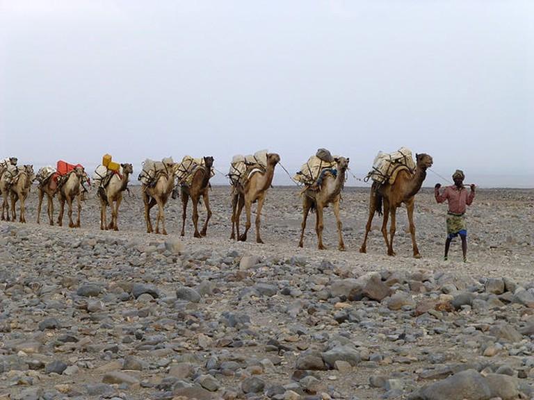 Ethiopie-Région_Afar-Caravane_de_sel