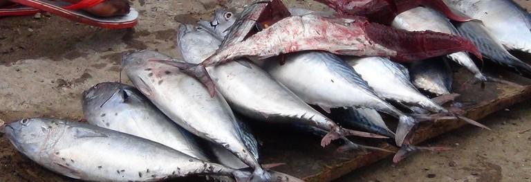 fish-tadjourah-market-djibouti-fresh-caught