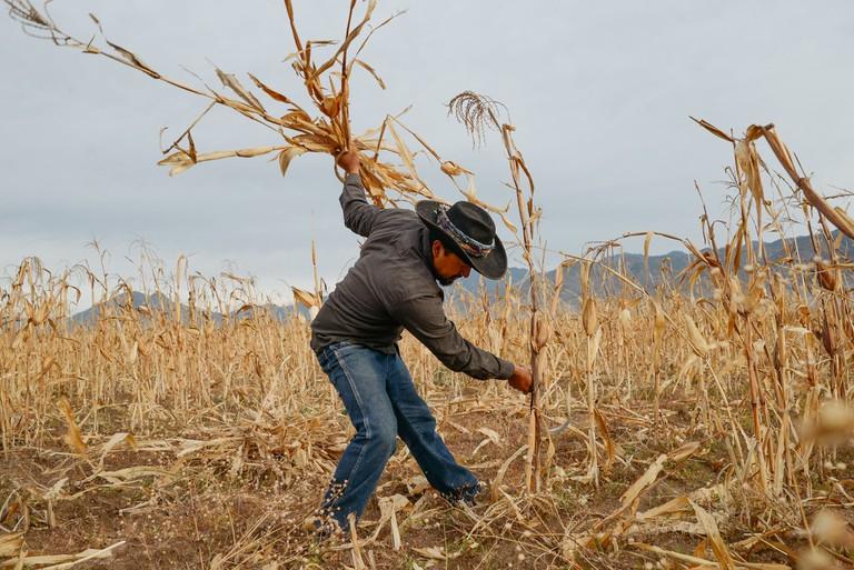 harvest edit 2018 (112 of 142)