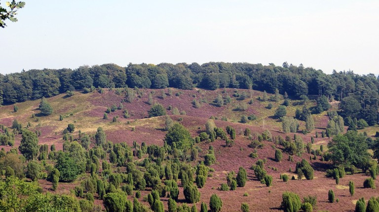 luneburg-heath-totengrund