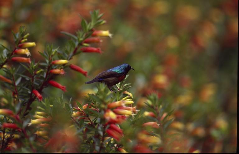 Nyungwe has over 300 bird species