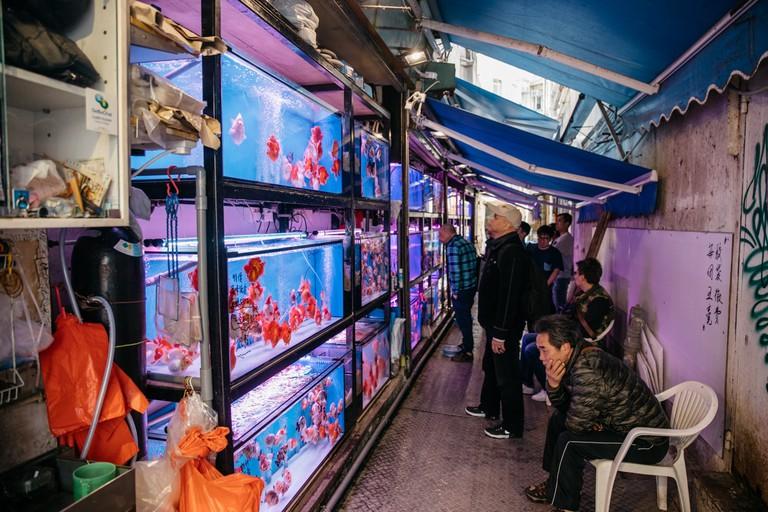 SCTP0099-LO-HONG KONG-GOLD FISH STREET-00004
