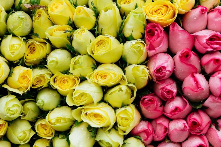 SCTP0126-Abasnejad-Flower Market-00072