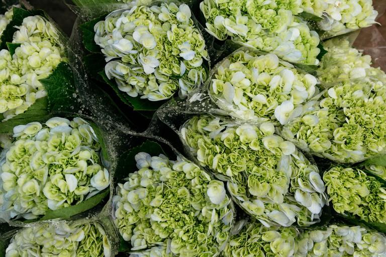 SCTP0126-Abasnejad-Flower Market-00089