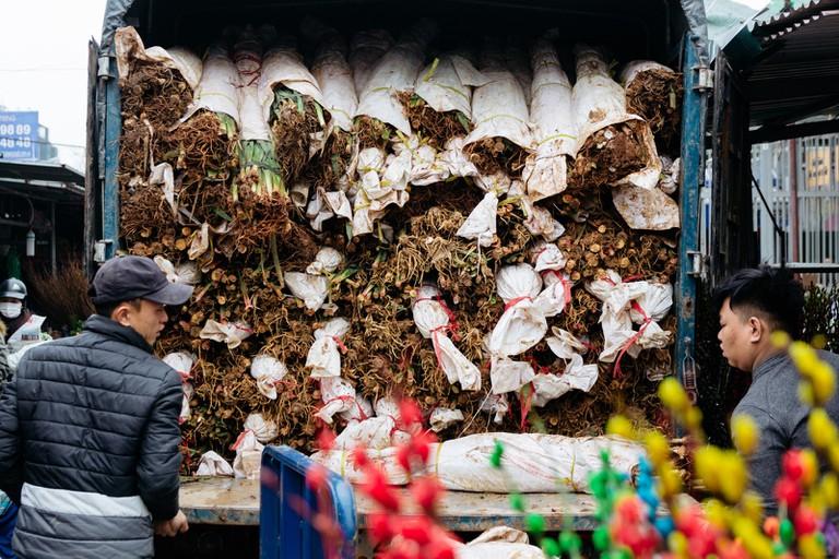 SCTP0126-Abasnejad-Flower Market-00098