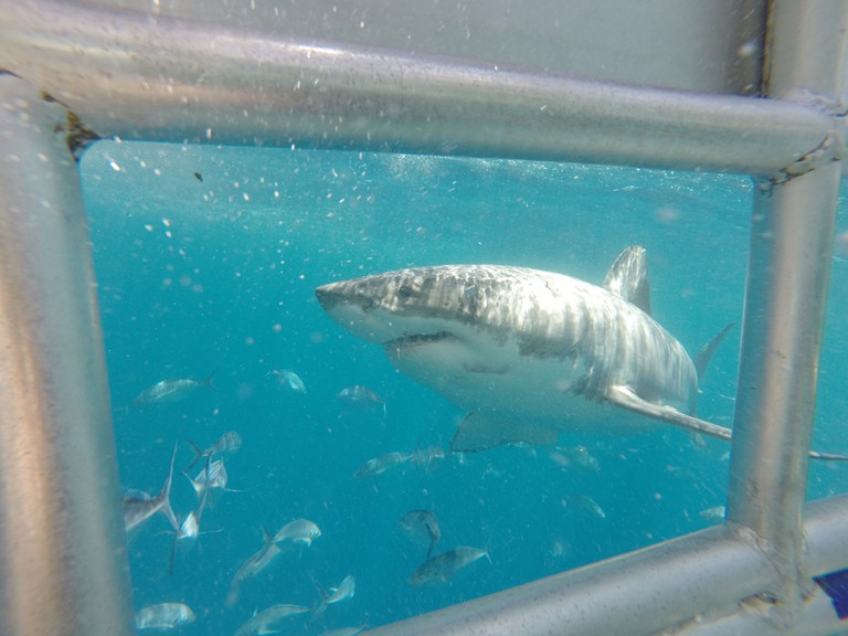 Shark cage dive in Port Lincoln | © Courtesy of Tom Smith