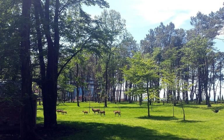Shekvetili park