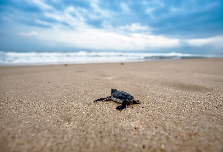 turtle-2201433_1280