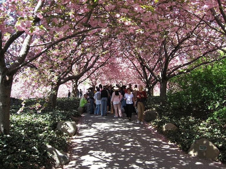 1024px-Brooklyn_Botanical_Gardens
