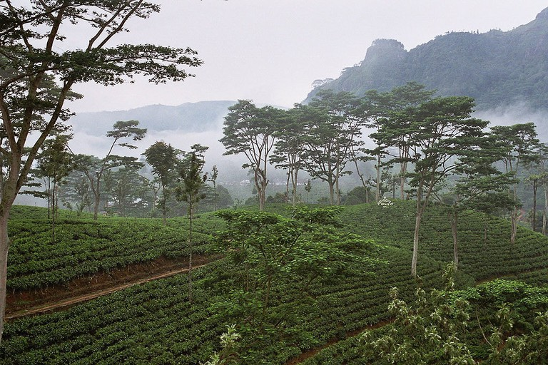 1024px-Sri_Lanka-Tea_plantation-02