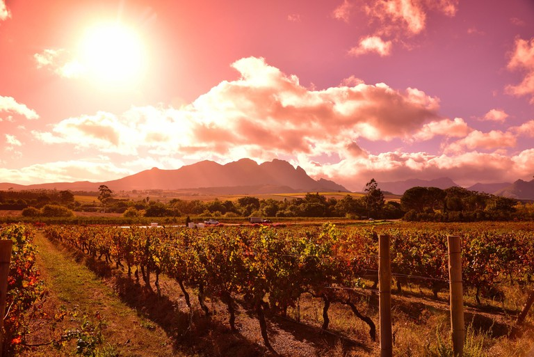 Vineyards and mountains