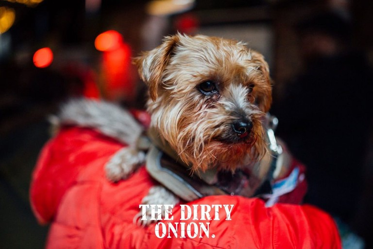 Pooch Social At The Dirty Onion