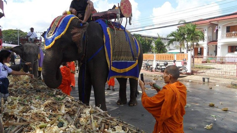 Elephants in Surin, Thailand